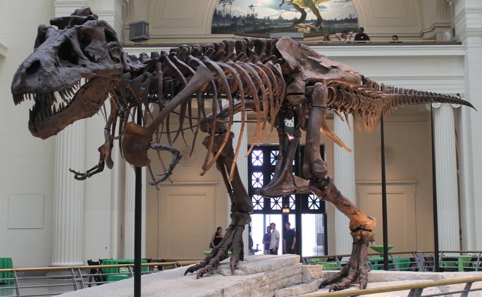 Sue the DInousaur